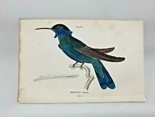 1st Ed Hand-colored Jardine's Natural History 1834 - Anais Hummingbird - #1 & #2