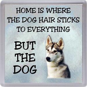 "Siberian Husky Coaster ""Home is Where the Dog Hair Sticks to ....."" by Starprint"