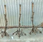 3 Chandelier/Sconce arms  Brass   French?  Figural