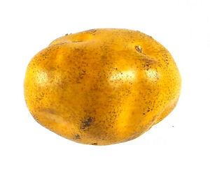 Artificial Potato Yellow - Plastic Vegetable Potatoes Fake Vegetables