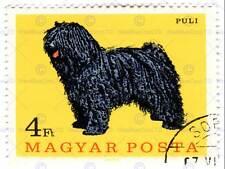 Estampilla Hungría Ovejas Perro Art Print cartel 30x40cm CC6759
