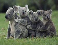 KOALA BEARS     MOUSE PAD  IMAGE FABRIC TOP RUBBER BACKED