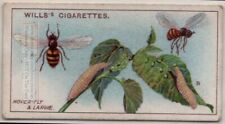 Hoverflies Flower Flies Insect Plant Pest 100+ Y/O Trade Ad Card