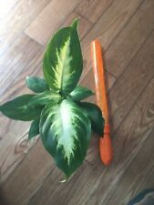 live indoor house plants