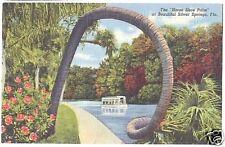 Linen Postcard Horse Shoe Palm Silver Springs Florida