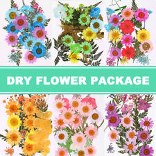 Pressed Flower Mixed Dried Flowers Art Floral Decors Collection Gift Craft DIY
