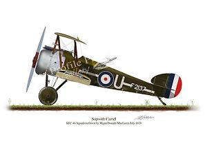 Sopwith Camel 1918 Aircraft Profile Artwork MacLaren A5 A4 Print WW1