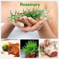 Rosemary Seeds Rosmarinus Officinalis Heirloom Herb Seed Beautiful Healthy Decor