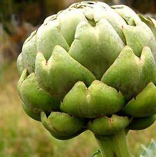 Artichoke Seeds- Green Globe- Heirloom- 20+ Seeds  $1.69 Max Shipping/order