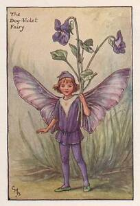 The Dog-Violet Flower Fairy Original Vintage Print by Cicely Mary Barker