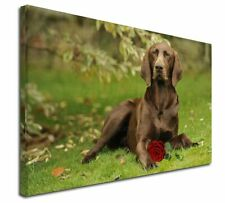 More details for german shorthaired pointer with red rose x-large 30