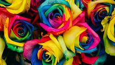 LIGHT COLOUR RAINBOW ROSE SEEDS x 20 FRESH STOCK AUSSIE SELLER,FREE POST