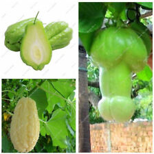 10 Pcs Seed Outdoor Plants Garden Ornamental Pumpkin Chayote Bonsai Potted Plant