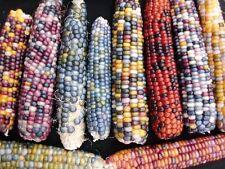 15 LARGE Mixed Colors GLASS GEM CORN Ornamental Edible Zea Mays Vegetable Seeds