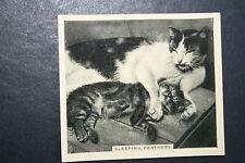 Cats Sleeping      Original  1930's Vintage Photo Card
