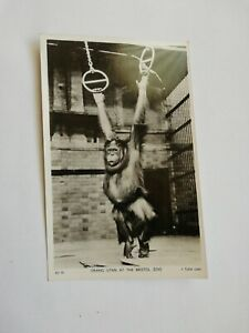 Postcard Orang Utan  At Bristol Zoo Tucks real Photo postcard unposted