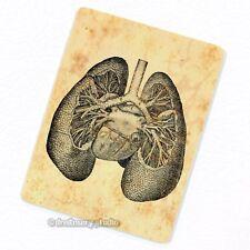 Lungs Deco Magnet, Decorative Fridge Antique Medical Illustration Anatomy Gift