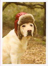 Lab Labrador Retriever Dog in Hat Christmas Cards Box of 10^