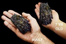 "Carborundum 3""-4"" 4-7 Oz Mineral Specimen All Chakra Healing Crystals Stones"