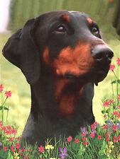 DOBERMAN PINSCHER HEAD STUDY LOVELY DOG GREETINGS NOTE CARD