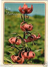 Fleurs - cpsm - Lis Martagon (H5424)