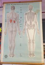 More details for 1950's vintage original st johns ambulance male anatomy  posters x2