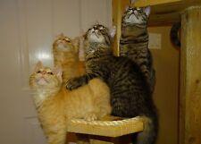 "Scoot & Newts Presents   "" Teamwork """