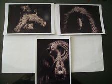 Three Afghan hound Photo Postcards