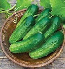"""BEST ON EBAY"" 40 CUCUMBER SEEDS - PICKLING SMR58 - FRESH NON-GMO  VEGETABLE"