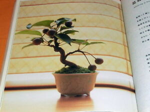 Let's Begin Miniature BONSAI book Japan Japanese mini little #0758