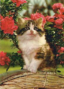 postcards cats cartoline gatti cat catz chats katzen gatos katten vintage age 60