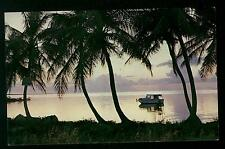 PEACEFUL FLORIDA WATERWAYS PHOTO BY RALPH SCHUURMAN PALMS COLOR POSTCARD COND:VG