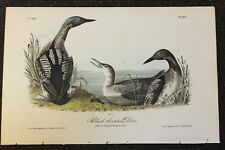 AUDUBON'S BIRDS of AMERICA - BLACK THROATED DIVER - First Edition Octavo pl #477