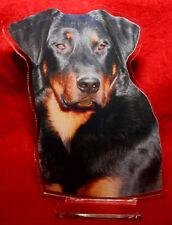 statuette photosculptée 10x15 cm chien beauceron 7 dog hund perro cane
