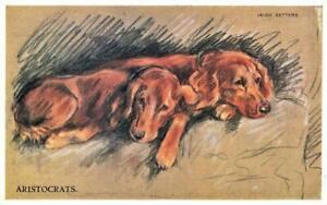 1951  IRISH SETTERS  MAC  Lucy Dawson  Dog Postcard
