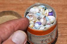 Vintage 1950s Natural Beach Seashells Tiny Miniature in Vintage Box Lot