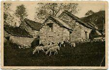 1909 Poggio Rusco - Case in campagna, gregge pecore - FP B/N VG ANIM