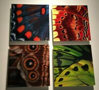 """NEW Peter Lik """"Butterfly"""" (Set of Four) Elements 9.75"""" x 9.75"""" Each Squared Lik2"""