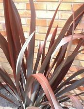 Phormium mixed New Zealand Flax 20 seeds