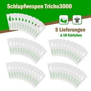 Schlupfwespen gegen Kleidermotten 10 Karten x 5 Lieferungen