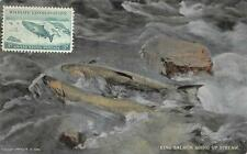 KING SALMON GOING UP STREAM ALASKA WILDLIFE CONSERVATION STAMP POSTCARD 1909