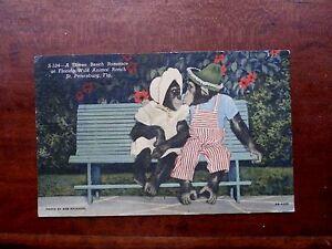 VINTAGE POST CARD CHIMPANZEES-A GREEN BENCH ROMANCE ST.PETERSBURG,FLA.
