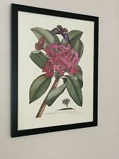 Plumeria - Georg Ehret  - Vintage Botanical poster - 20''x16'' floral wall art