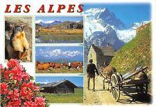 BT10351 les alpes cow vaches donkey ane marmotte france       France