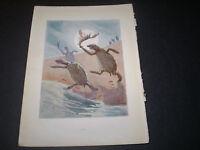 ALICE IN WONDERLAND c1922. VINTAGE BOOK PRINT. 262  MARGARET TARRANT - ART DECOR