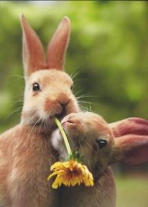 Bunnies Dandelions Easter Card - Greeting Card by Avanti Press by Avanti Press