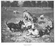 Mops, Hunde, Kampf mit dem Drachen, Original-Holzstich von 1888