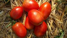 10+ GRANDMA MARYS PASTE Pastatomate ertragreich niedrig robust fest Tomatensamen