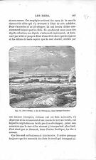 Coral Corail Whitsunday Islands Australia Australie GRAVURE ANTIQUE PRINT 1874