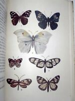 BUTTERFLY BIOLOGICAL INSECT ARGENTINA COLOR ILLUSTRATIONS XRARE BOOK